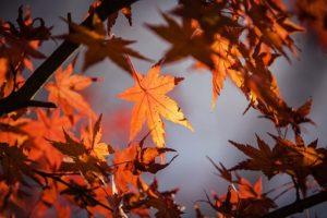 autumn-leave-1415541__340